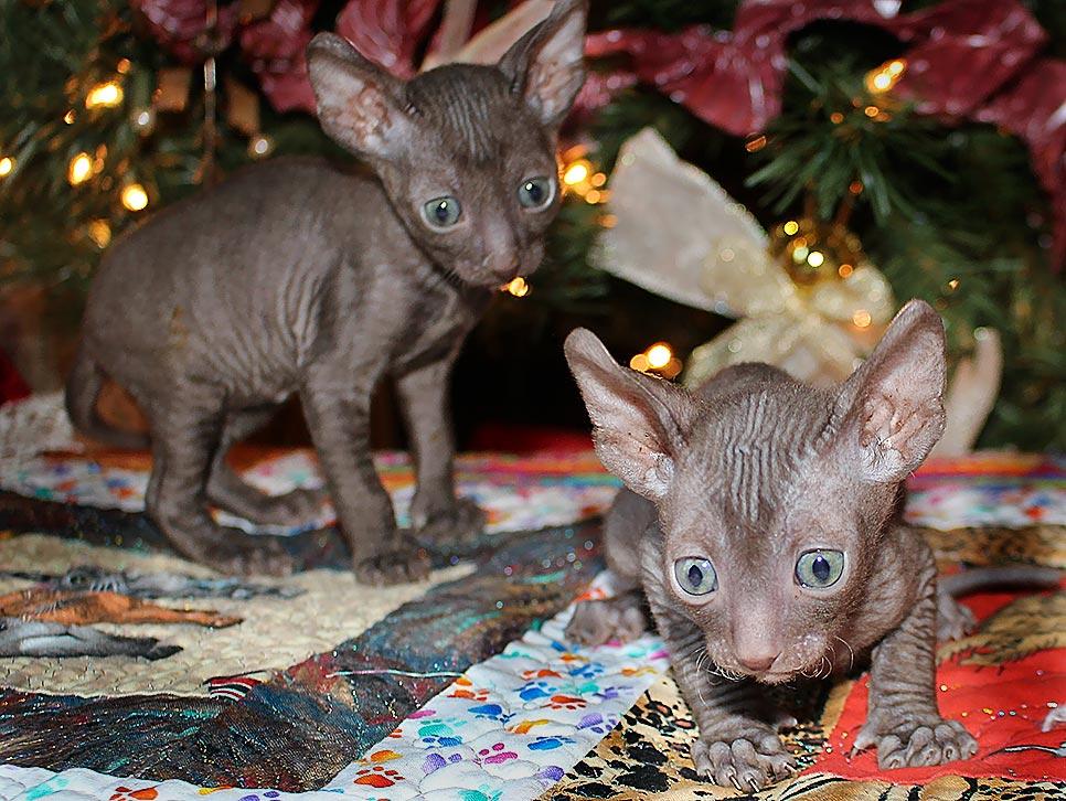 Kittens by Kaylee